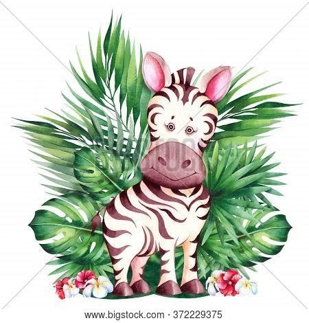 Little Zebra Cub. Cute Children Cartoon Illustration. Watercolor Isolated On White Background.