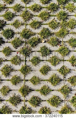Green Grass Between The Sidewalk Square Tiles. Grass And Cement Pavement. Eco Parking Texture Backgr