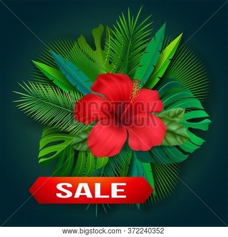 Vector Tropical Flower. Set Tropical Flower And Leaves Hibiscus, Palm Leaves, Monstera Leaves And Ot