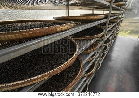 Black And Brown, Red Peppercorns Drying In Drying Room Or Box On Plates Of Reed On Black Pepper Plan