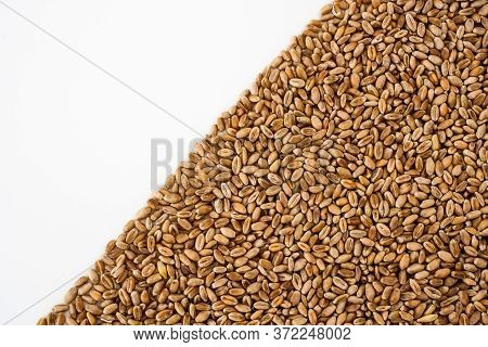 Wheat Grains On A White Background, Natural Dried Grain In The Form Of A Triangle On The Right Side,