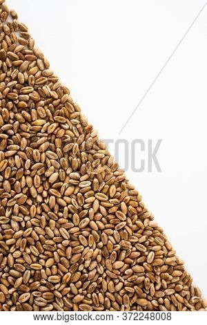 Wheat Grains On A White Background, Natural Dried Grain In The Form Of A Triangle On The Left Side,