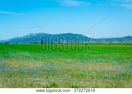 a view over a flooded paddy field in the Ebro Delta in Deltebre, Catalonia, Spain