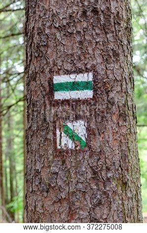 Green Tourist Mark On A Tree Trunk. Walking Path Background. Tree Trunk With Signs For Navigating In