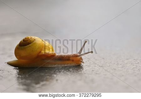Beautiful Macro Shot Of A Snail With A Shell