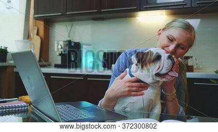 Cheerful Young Woman With Bulldog Puppy Sitting In Front Of Laptop In The Kitchen. She Playing With