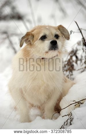 Little Doggy Mongrel On The Snow In The Winter