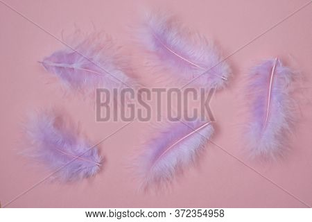 Pink Feathers Background.feathers Texture In Pastel Colors. Feathers Set Close-up Background.soft Fo