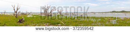 Dead Trees In The Old Town San Antonio De Padilla, Emerges From The Water During Low Tide Of The Vic