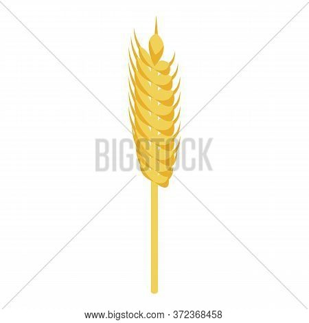 Wheat Plant Icon. Isometric Of Wheat Plant Vector Icon For Web Design Isolated On White Background