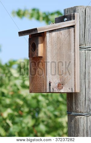 Bird House In Vineyard