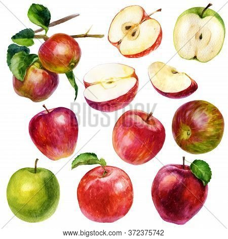 Watercolor Illustration, Set. Watercolor Red Apple, Green Apple, Apple With A Leaf, Pink Red-green A