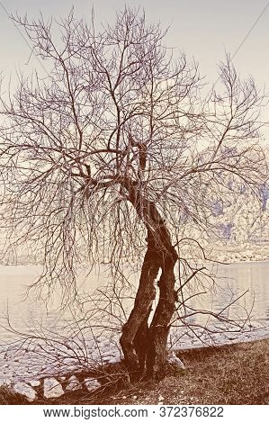 Silhouette Of Damaged Leafless Tree. Color Tinting. Montenegro, Bay Of Kotor