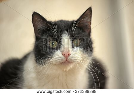 Oid Sick Cat With Cataract Close Up