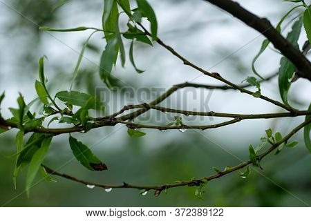 Close-up image of raindrops on a tree branch