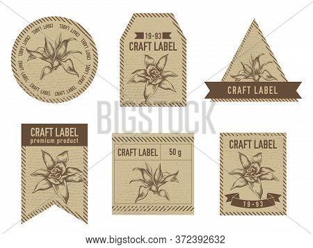 Craft Labels Vintage Design With Illustration Of Guzmania Stock Illustration