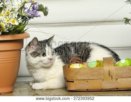 A Cat With A Congenital Nasal Defect (wolf's Lip) Next To A Pot With Flowers And A Basket With Easte