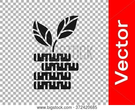 Black Dollar Plant Icon Isolated On Transparent Background. Business Investment Growth Concept. Mone
