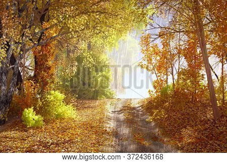 Autumn Forest, Rainy Background / Autumn Landscape Background Rain Texture In An October Forest, Bad