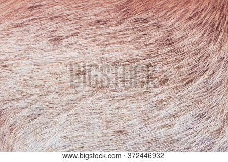 Light Brown Animal Fur, Full Frame Hairy Texture Detail. Close Up.