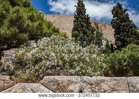 Under View Of Parthenon, Rock Of Acropolis, Athens, Greece. Nature Surrounds The Ancient Monument. G