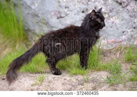 Old Twenty Year Old Black Cat And Grass