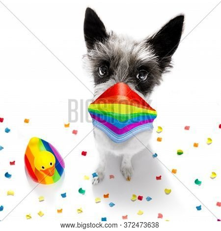 Quarantine  Coronavirus Covid 19 Gay Homosexual  Poodle Terrier Dog Proud Of Human Rights ,sitting A