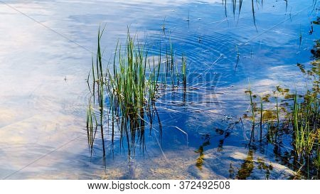 Grass Reflecting On The Surface Of Pyramid Lake In Jasper National Park, Alberta