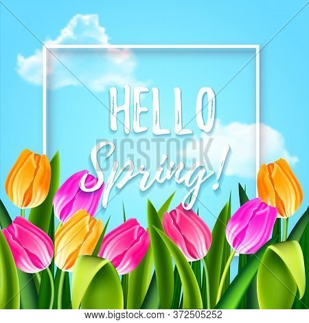 Hello Spring Tulips Flowers Background With Lettering And White Frame. Template For Greeting Card Wi