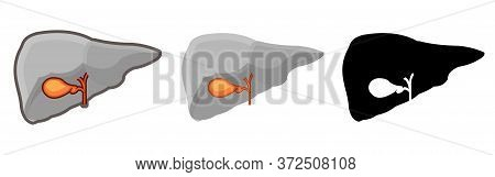 Healthy Human Gall Bladder. Whole. Set. Color Image And Monochrome Icon. A Series Of Illustrations O