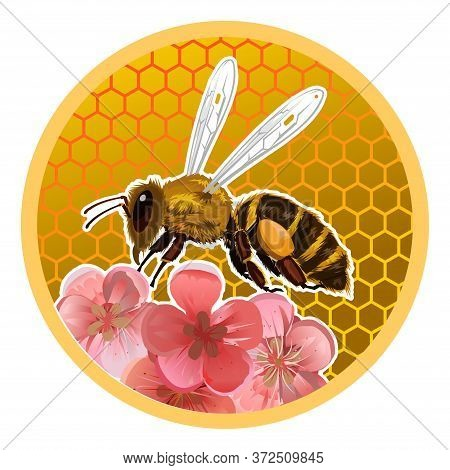 Beer Honey Jar Lid Design Concept. Packaging Design. Printing On Plastic Or Metal Can Lids. A Bee On