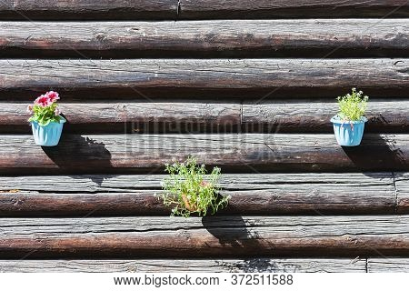 Log Wall Of An Old Residential Building With Hanging Flower Pots Close Up