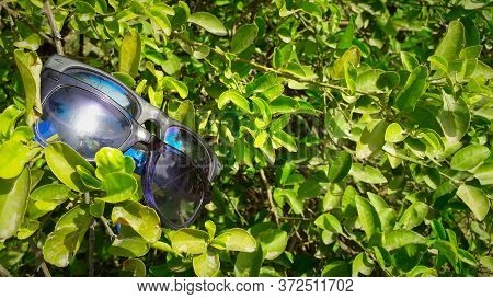 Two Specs In Bold Plastic Frame Hanging On Green Leaves Of A Tree In Sunlight.