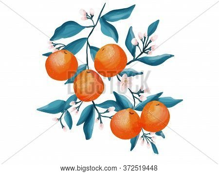 Orange Hand Drawing Illustration. Paint Textured Orange Drawing, Fruit Design Resource, Orange And B