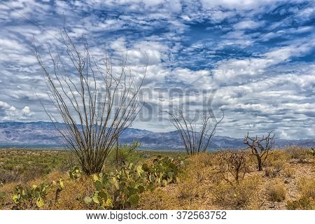 Landscape Of Large Saguaro Cactus Plants On Hillside In Saguaro National Park In Tucson, Arizona