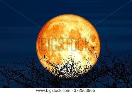 Super Sturgeon Moon And Silhouette Coconut Tree Mountain In The Night Sky