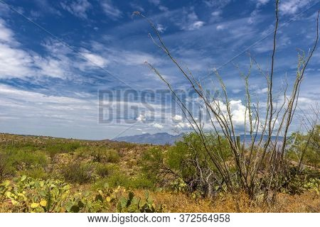 Landscape At Saguaro National Park Near Tucson, Arizona