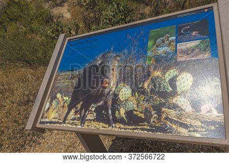Usa, Arizona, 26.06.2016 Saguaro National Park. Tourist Center And Tourist Information