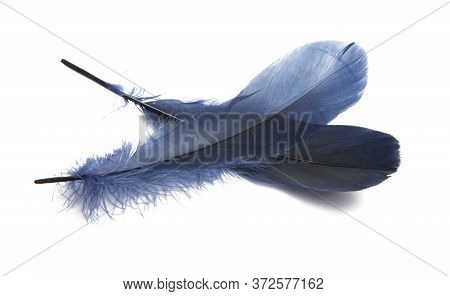 Blue Feather Design Isolated On White Background