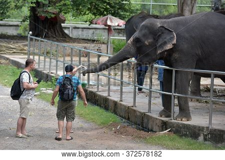 Thailand, Pattaya, 26,06,2017 Visitors Feed Elephants At The Zoo On A Crocodile Farm