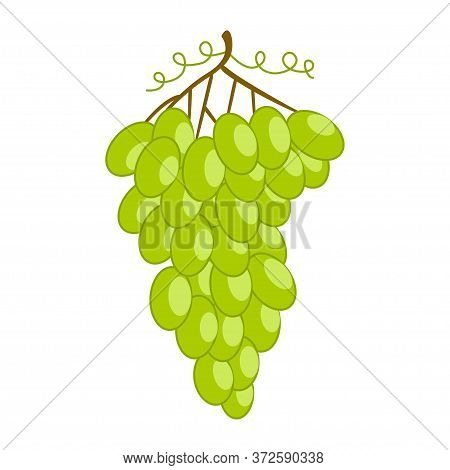 White Grape. Fresh Fruit, Organic Food Icon On White Background. Vector Bunch Wine Grapes In Flat St