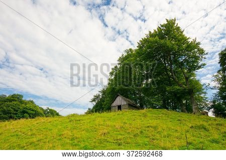 Tree On The Hill In Green Mountain Landscape. Beautiful Nature Scenery With Grass On The Meadow Roll