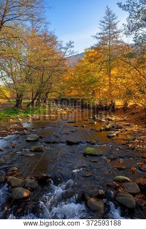 River In The Forest. Water Stream Among The Stones. Yellow Foliage In Morning Light. Beautiful Scene