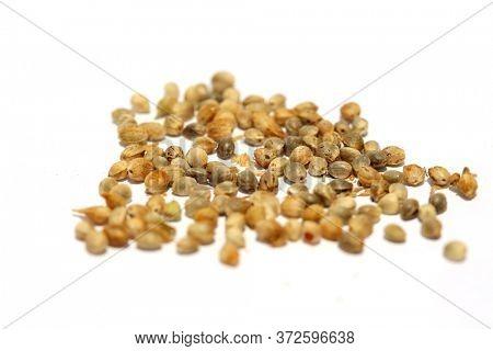 Marijuana Seeds. Cannabis Seeds Isolated on white. Medical and Recreational Marijuana Seeds ready to be planted to grow Marijuana Plants.