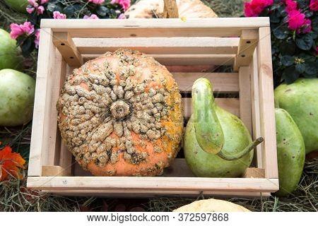 Decorative Pumpkin Varieties Lagenaria (bottle) And Gelioux (relic) In A Wooden Box. Food, Vegetable