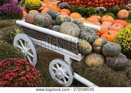Pumpkin Varieties Toad Green On A White Cart. Food, Vegetables, Agriculture, Healthy Foods.