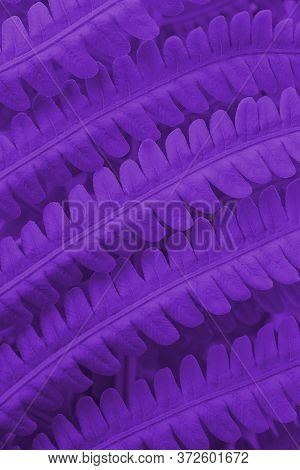 Fern Foliage. Dark Saturated Violet Tinted Plant Pattern. Stalks And Leaves. Natural Vertical Backgr