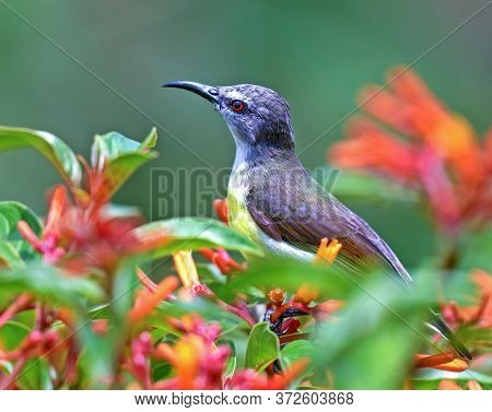 Very Colorful Shining Humming Bird Perched On A Flower Plant. Blurred Green Tropical Plants In Backg