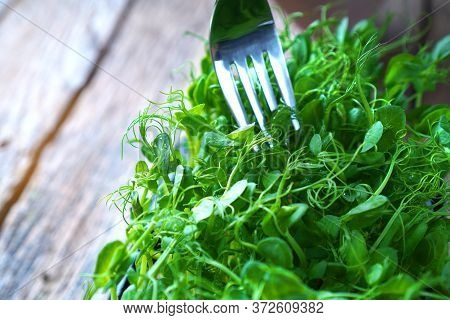 Microgreens Sprouts And A Fork. Heallthy Fiber-rich Eating.