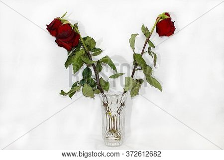 Three Red Wilted Roses In A Crystal Vase On A White Background. Selective Focus.